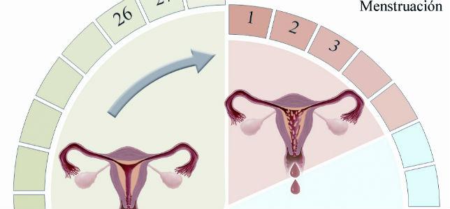 menstruacionok