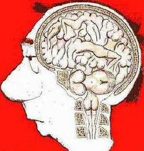 Cerebro_masculino1_thumb